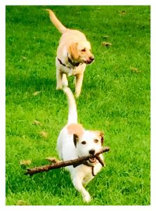 Dog Walking Gwen & Eight