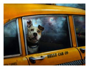 Pet Taxi Image